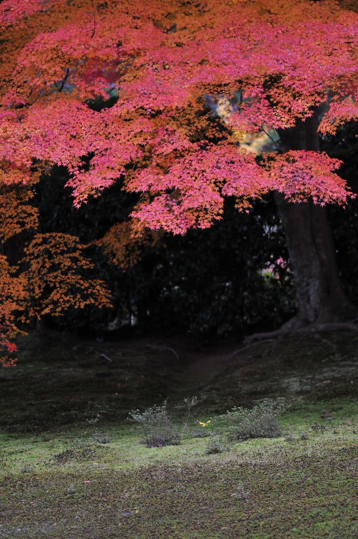 2007/09/28京都AL929