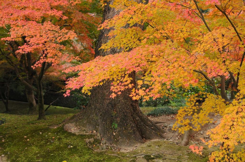 2007/09/28京都NL748