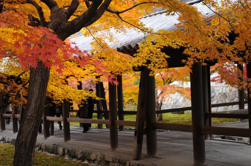 2007/09/28京都NL0772