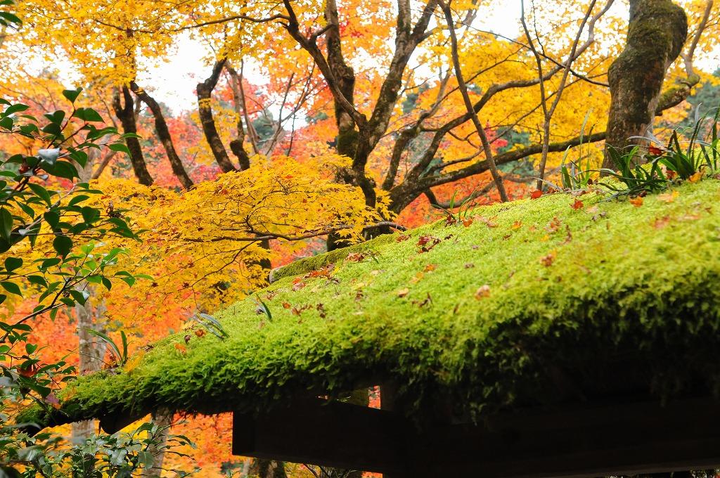 2007/09/28京都NL777