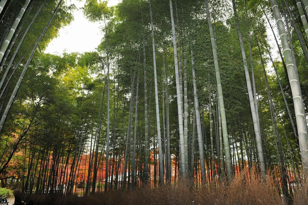 20071129京都天龍寺