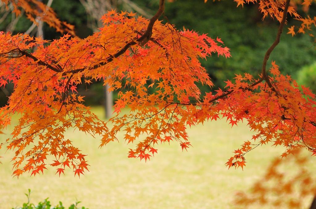 20071129京都大河内山荘