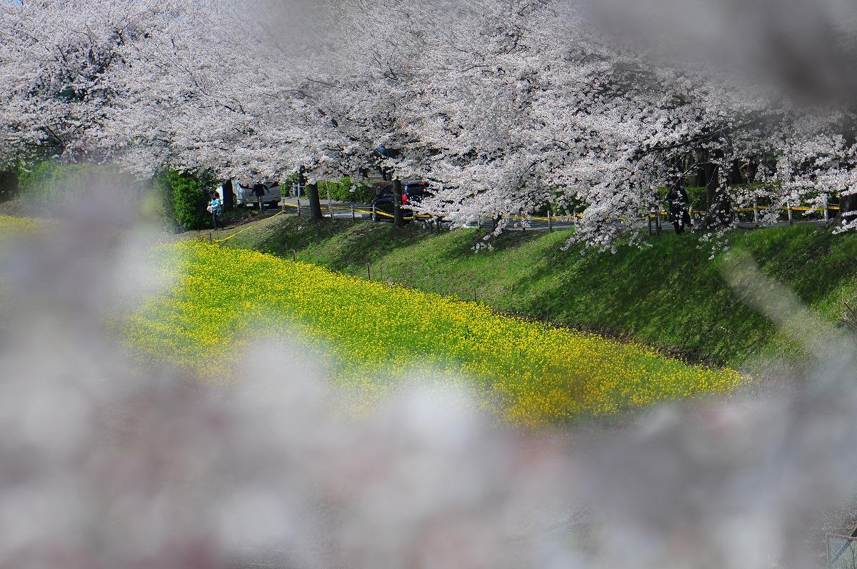 桜1908