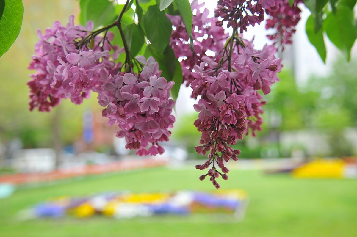 大通り公園NikonD300+AF-S DX Zoom Nikkor ED 17-55mm F2.8G(IF)