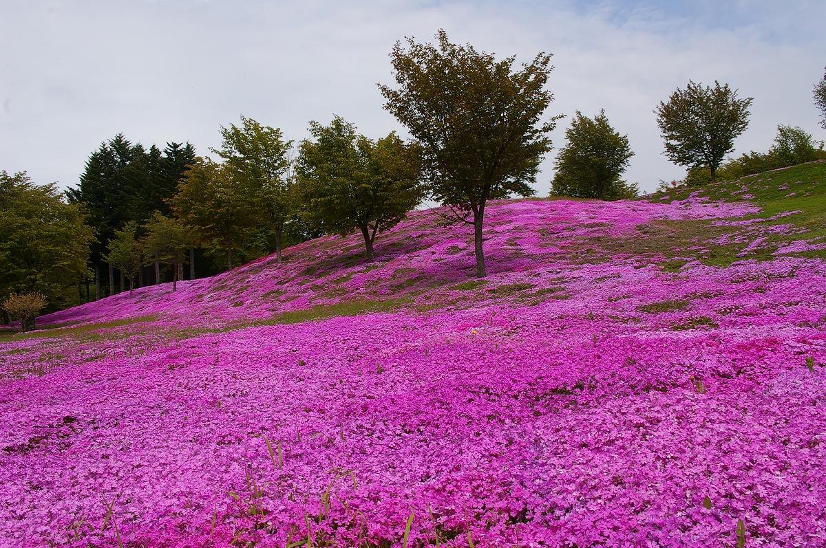 津川21世紀の森