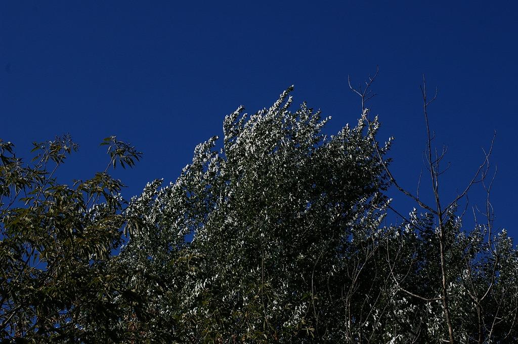 前田森林公園葉の裏側白