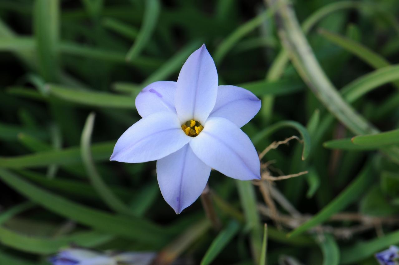 _7373_庭の花