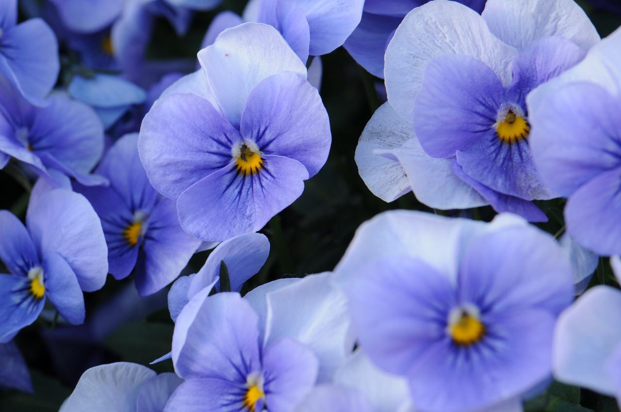 _7374_庭の花