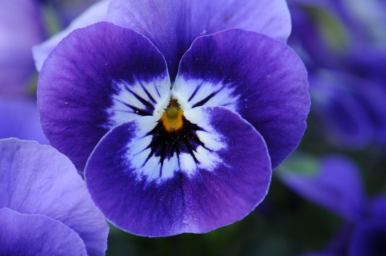 _7380_庭の花