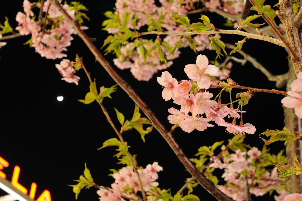 _7408_近所のスーパーの桜