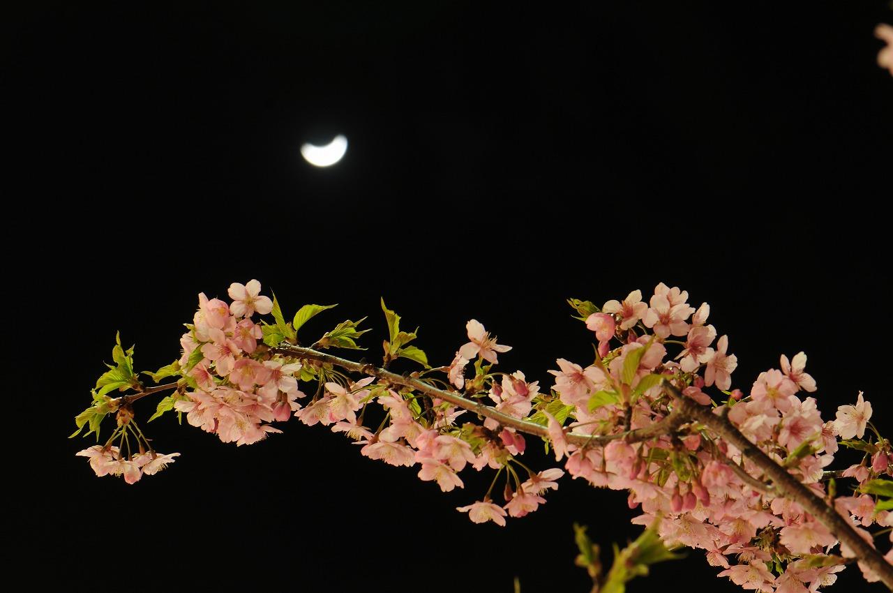 _7415_近所のスーパーの桜
