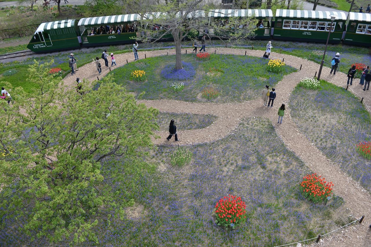 百合が原公園_今年はムスカリイマイチ。