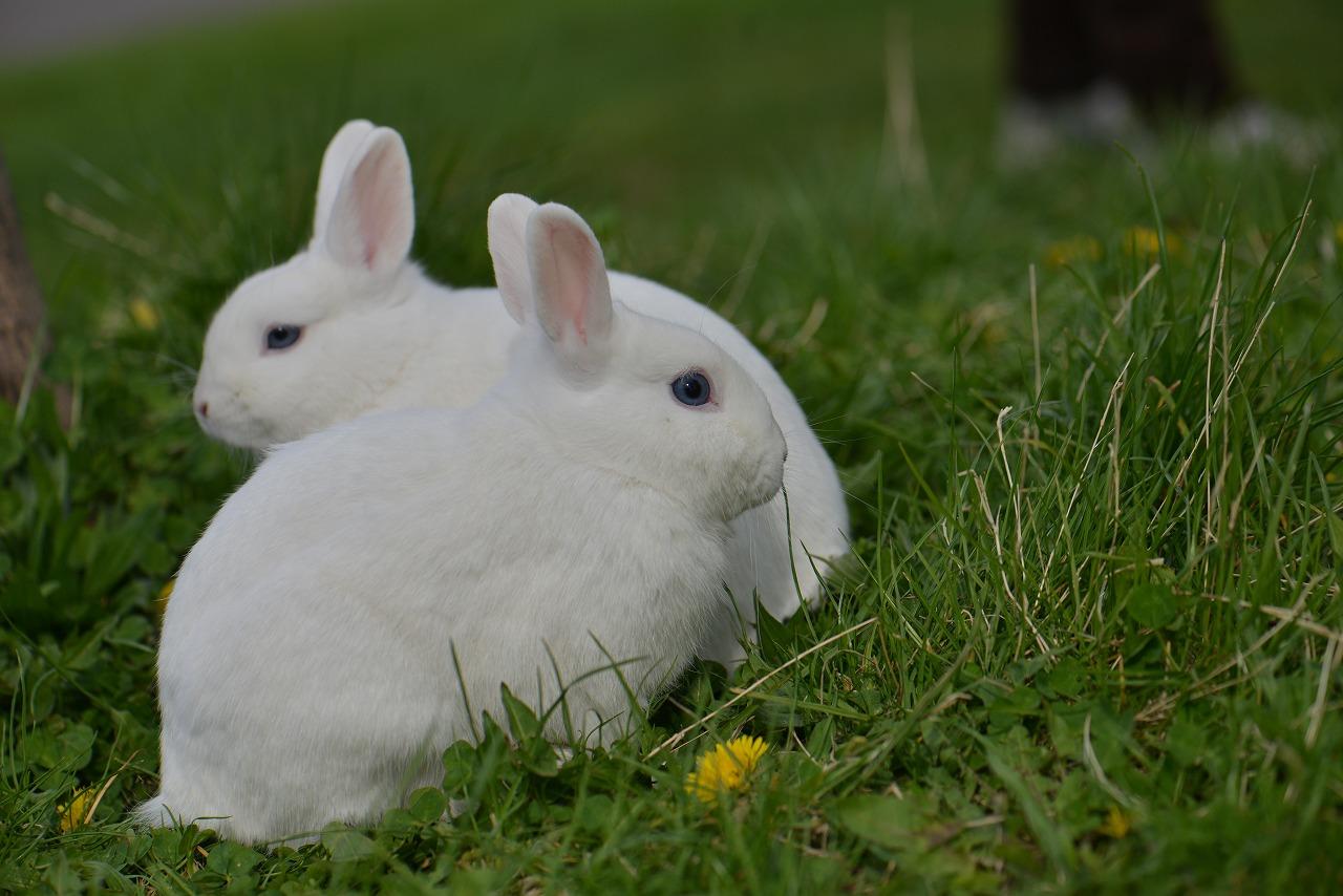 百合が原公園_なぜかウサギがいた
