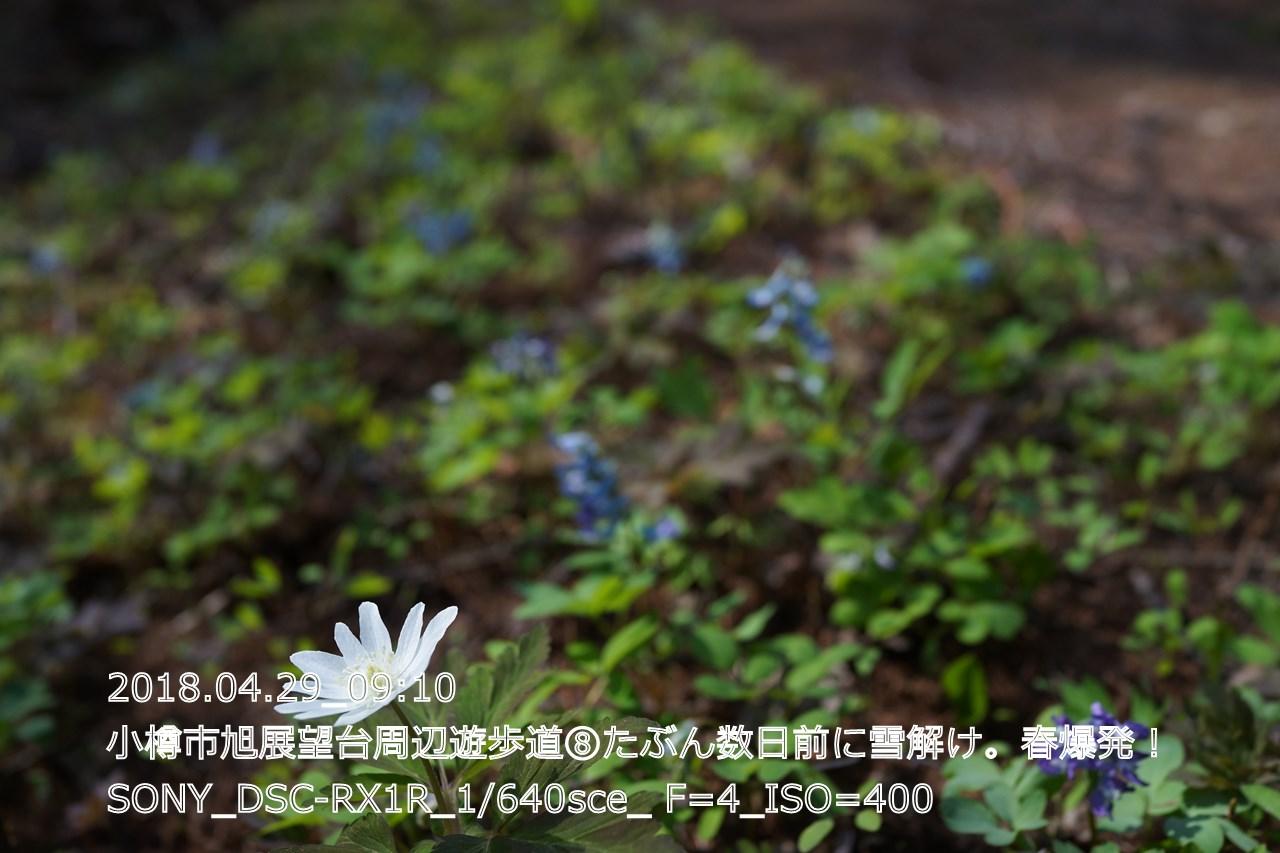 (DSC05140)