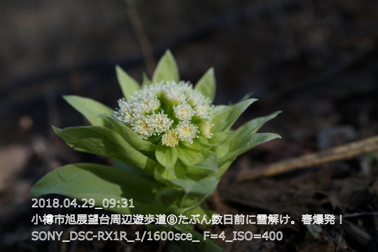 (DSC05145)