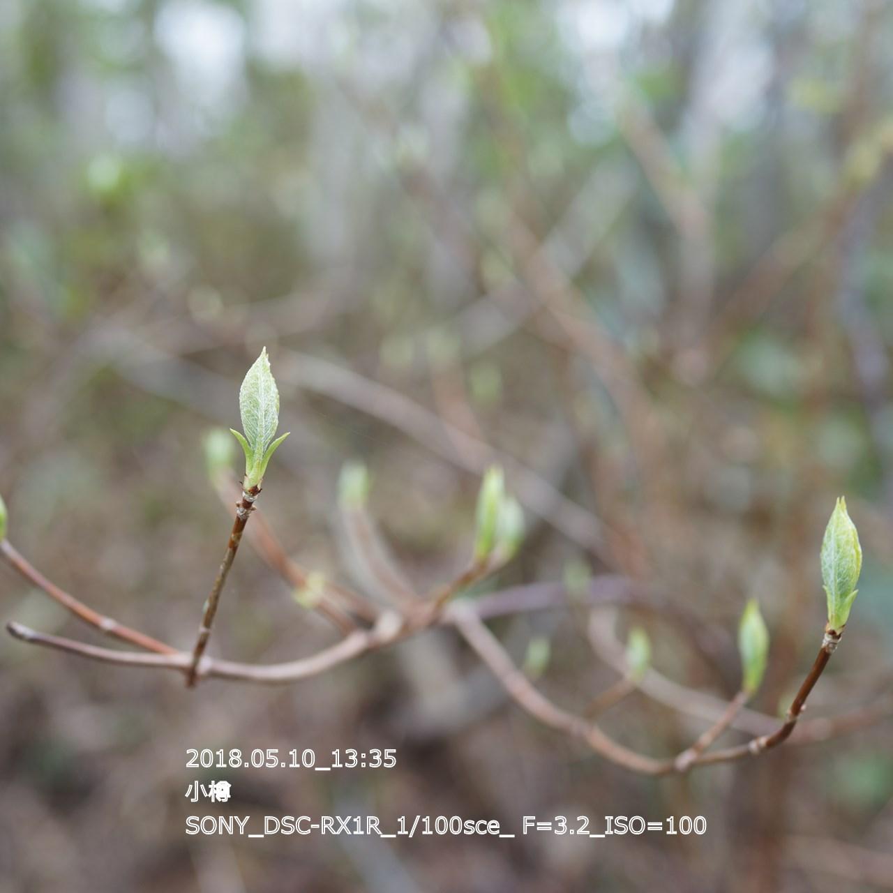 2018/05/11_06:13:44  DSC05232.jpg