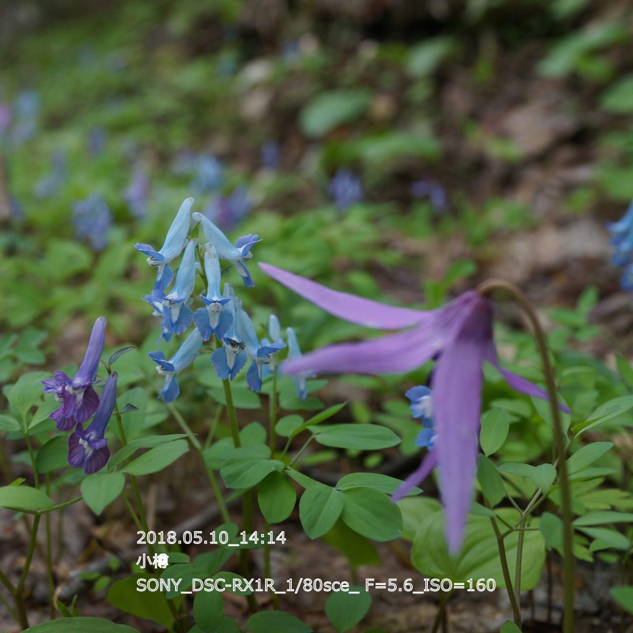 2018/05/11_06:16:22  DSC05240.jpg