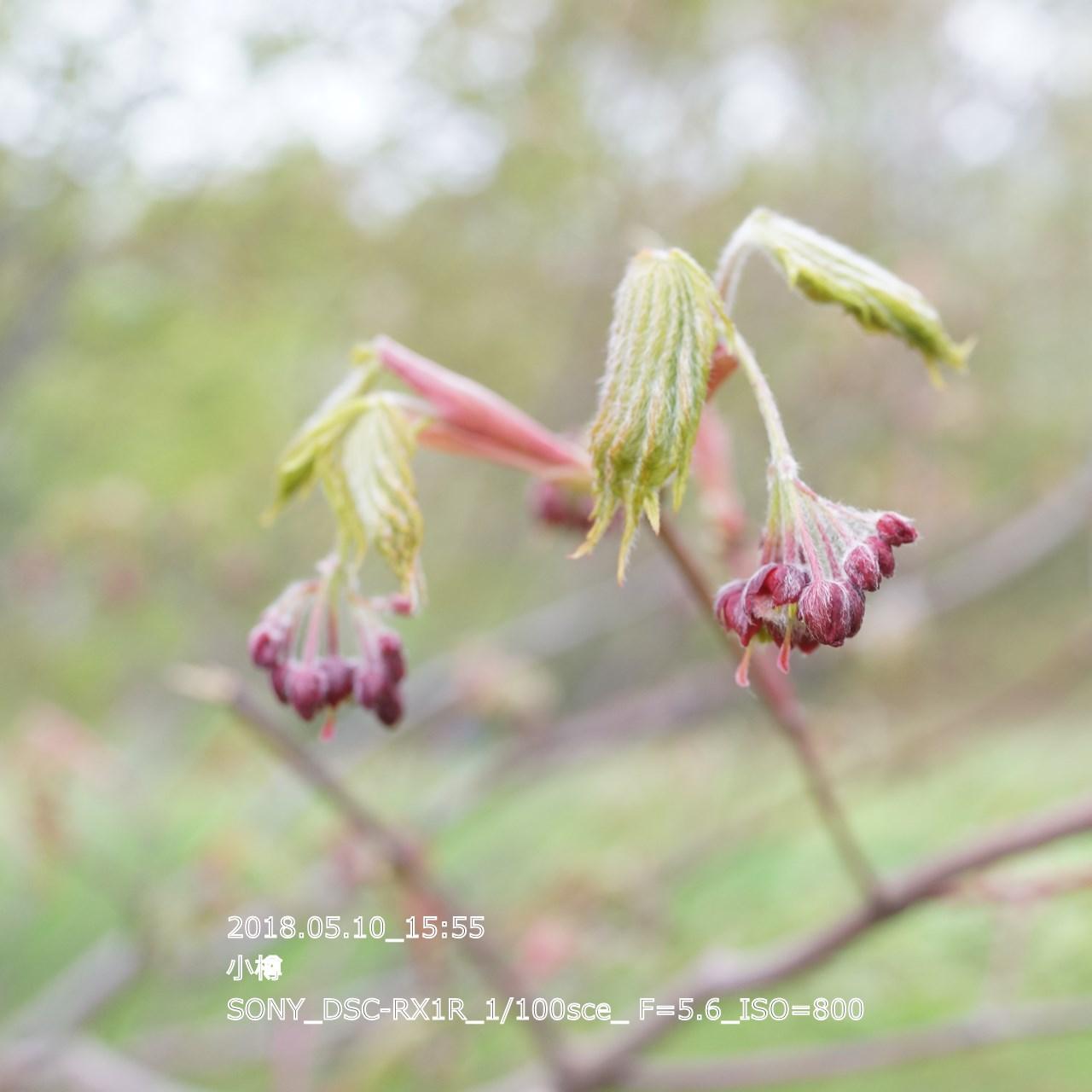 2018/05/11_06:28:35  DSC05264.jpg