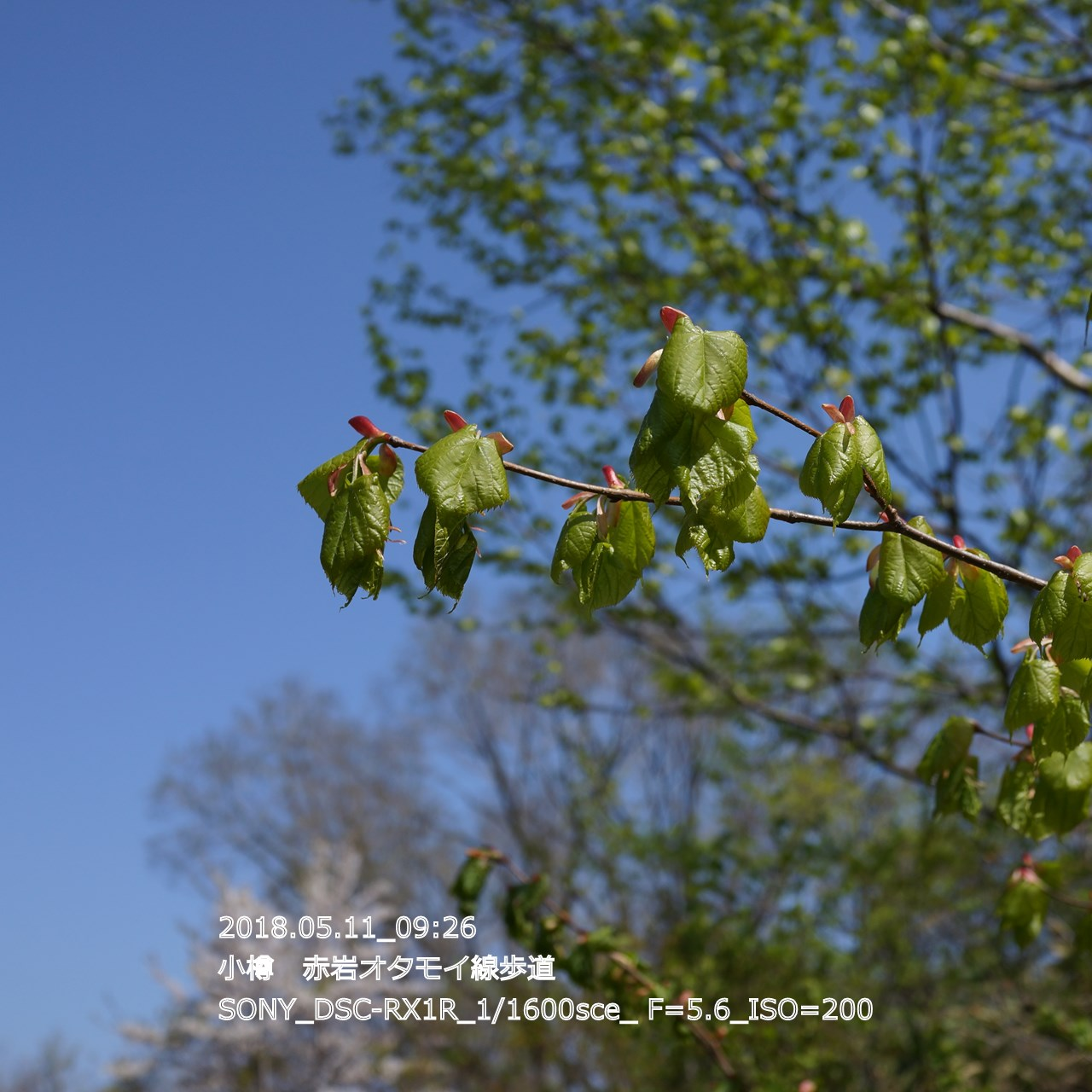 2018/05/11_19:45:18  DSC05296.jpg