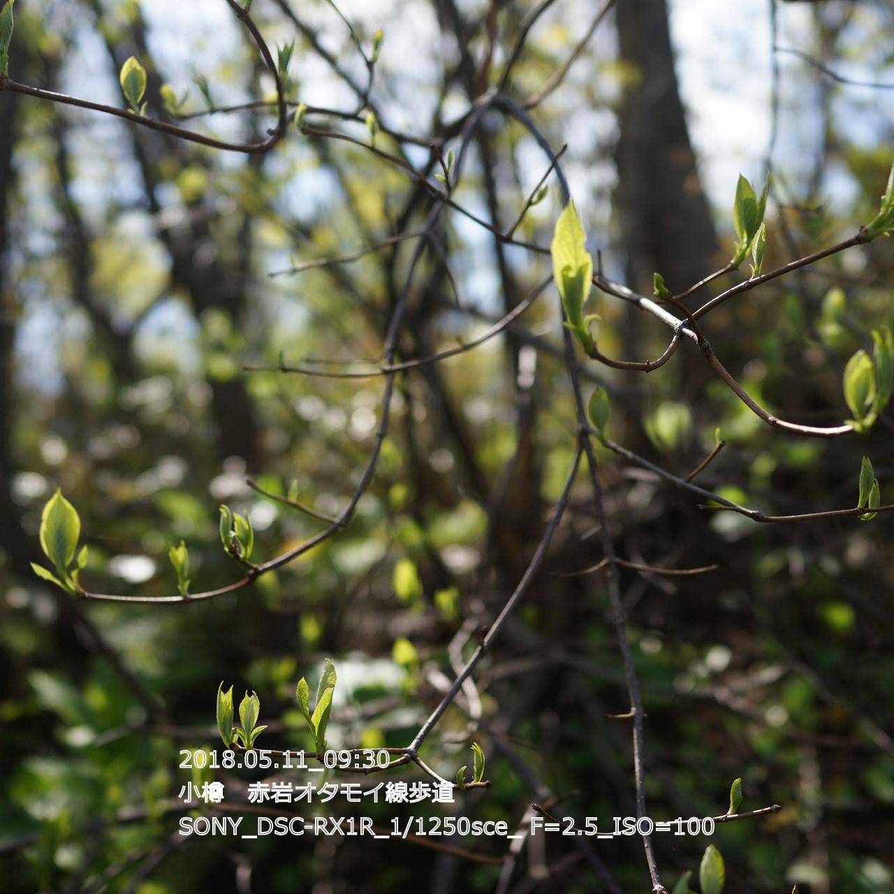 2018/05/11_19:45:18  DSC05297.jpg