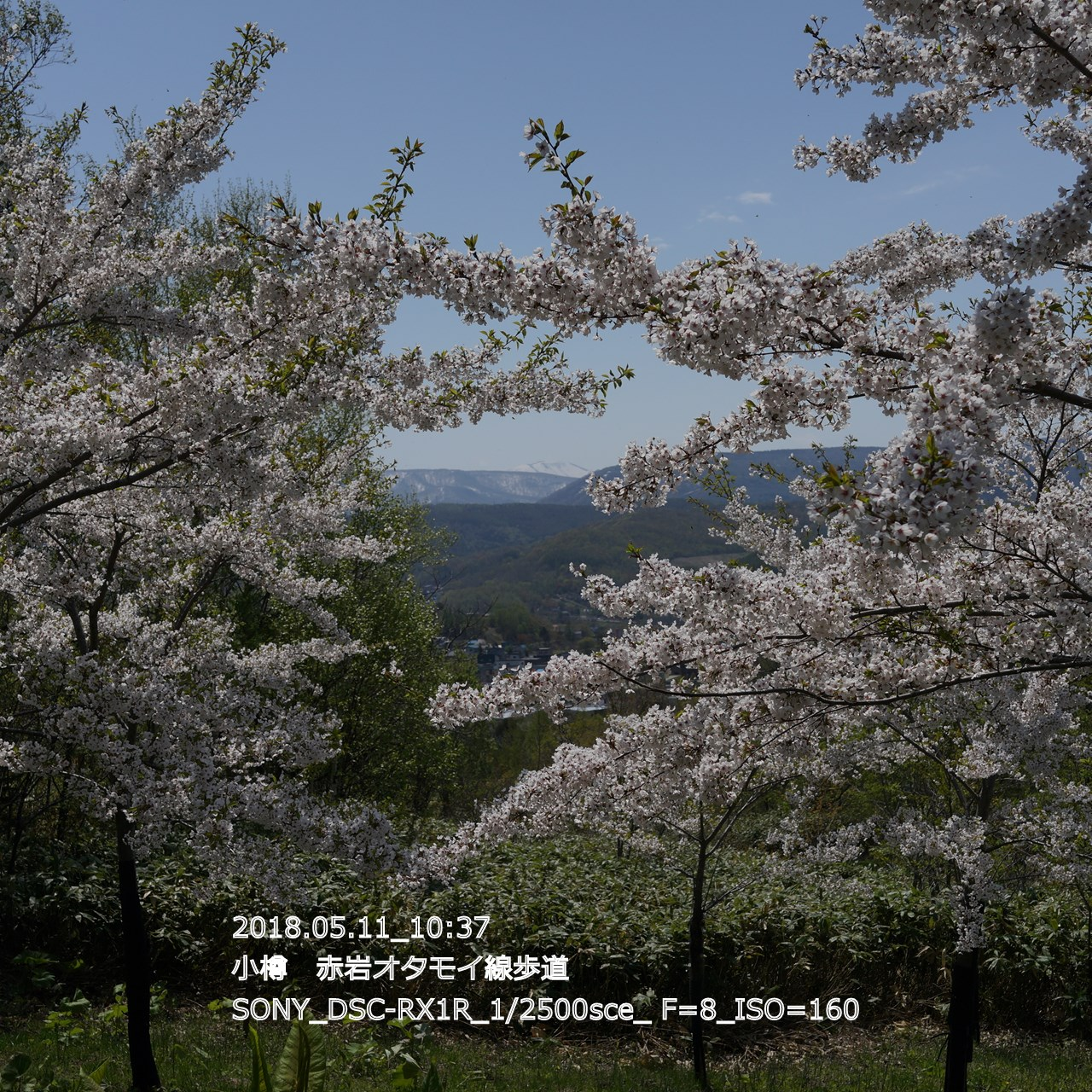 2018/05/11_19:45:18  DSC05305.jpg