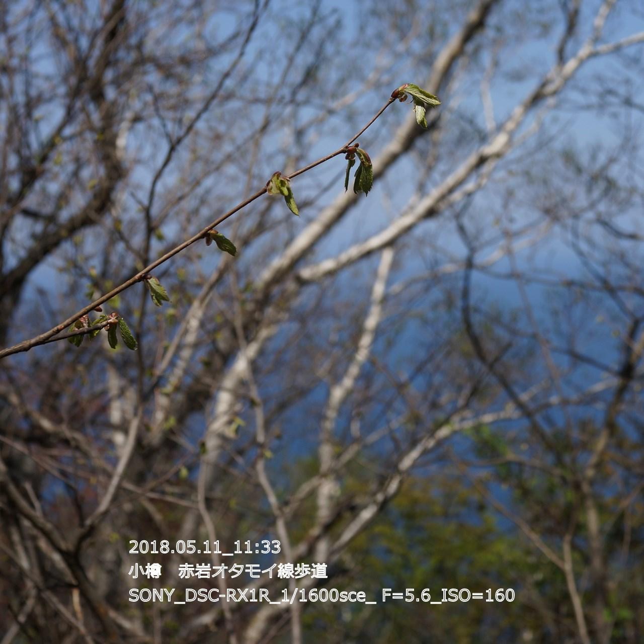 2018/05/11_19:45:18  DSC05308.jpg