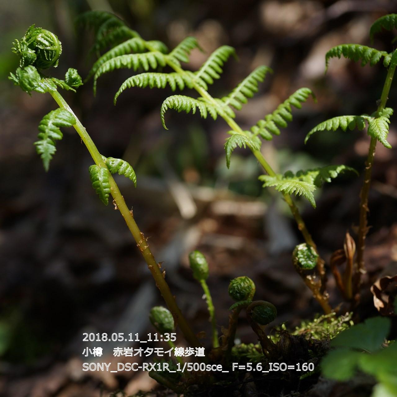 2018/05/11_19:45:18  DSC05311.jpg