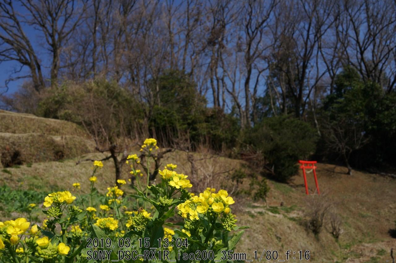 小山田菜の花