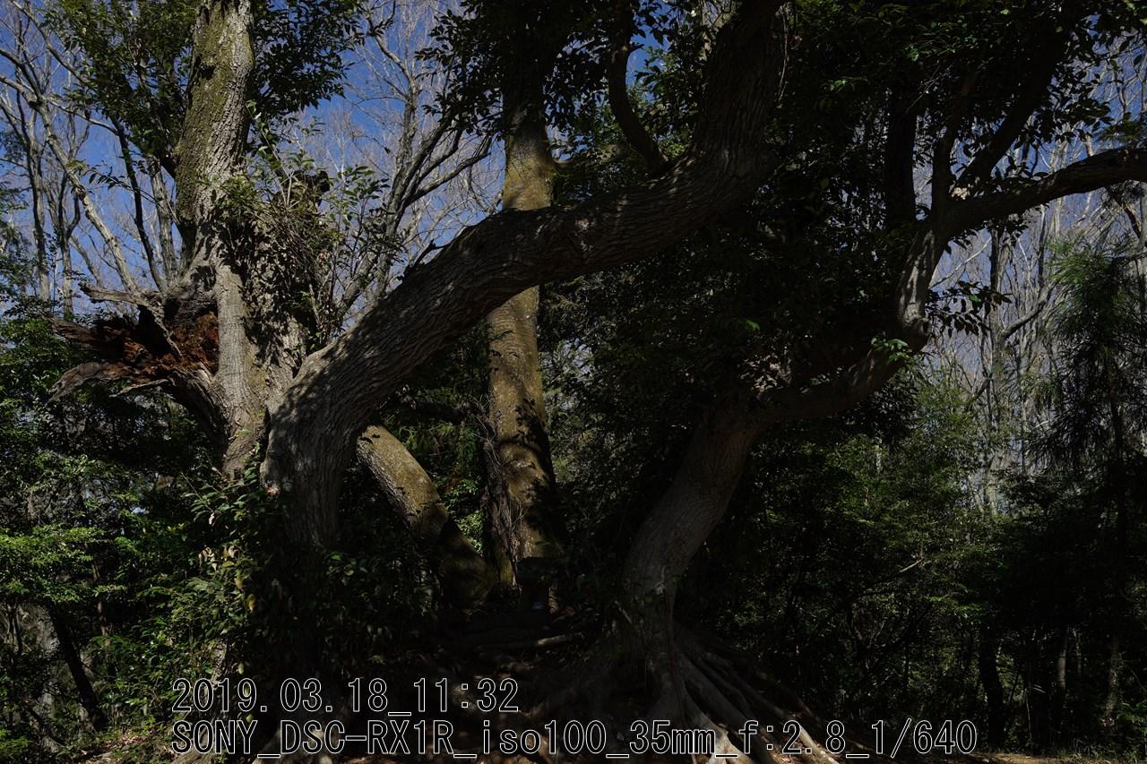 DSC09787.jpgこうせん塚を囲う大木